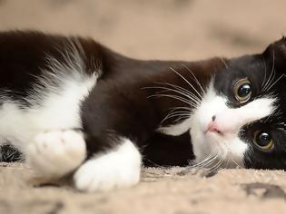 Φωτογραφία για Να πώς θα «ξυπνήσετε» την παιχνιδιάρικη φύση της γάτας σας
