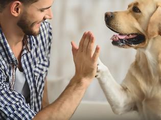 Φωτογραφία για Οι σκύλοι «ορμούν» στον ανθρώπινο… καρκίνο