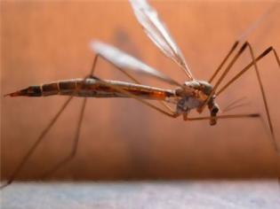 Φωτογραφία για Βάλτε τέλος στα κουνούπια με αυτό τον τρόπο...