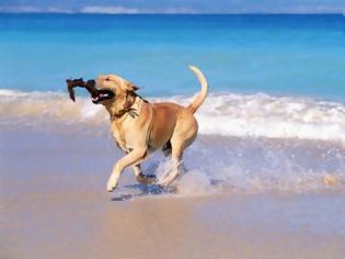 Φωτογραφία για ΑΡΤΕΜΙΔΑ: Αυτές είναι οι pet friendly παραλίες για εσάς και τον σκύλο σας!