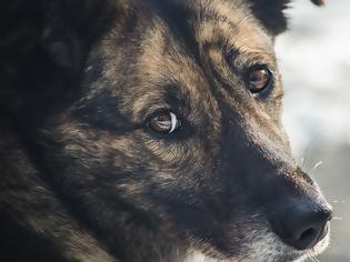 Φωτογραφία για Τα 11 σημάδια «κατάθλιψης» στον σκύλο