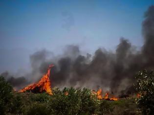 Φωτογραφία για Πυρκαγιά στην Ελαφόνησο: Εγκαταλείπουν το νησί οι επισκέπτες