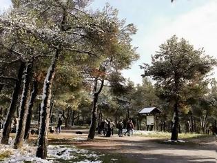 Φωτογραφία για Απαγόρευση κυκλοφορίας στο Σέιχ Σου και σε δασικές περιοχές της Χαλκιδικής
