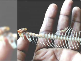 Φωτογραφία για ΠΡΟΣΟΧΗ! Αυτό πρέπει να κάνετε αν κολλήσει κόκαλο από ψάρι στο λαιμό σας!
