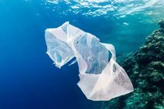 Γιατί τα θαλάσσια ζώα τρώνε τα πλαστικά που βρίσκουν στην θάλασσα