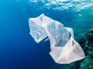 Φωτογραφία για Γιατί τα θαλάσσια ζώα τρώνε τα πλαστικά που βρίσκουν στην θάλασσα