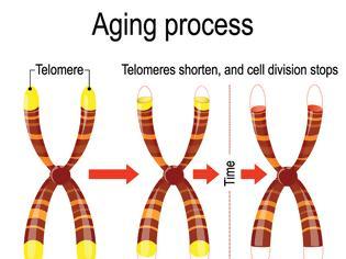 Φωτογραφία για Τελομερή, Βιολογική ηλικία και Χρόνιες ασθένειες
