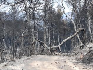 Φωτογραφία για Εύβοια – πυρκαγιά: Τρεις υπόπτους «βλέπουν» οι Αρχές – Ολα δείχνουν εμπρησμό