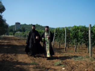 Φωτογραφία για 12394 - Άρχισε η συγκομιδή των σταφυλιών στην Ιερά Μονή Χιλιανδαρίου Αγίου Όρους (φωτογραφίες)