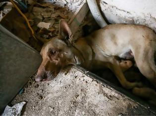 Φωτογραφία για Η σκυλίτσα - ηρωίδα που έσωσε τα μωρά της από την φωτιά στον Υμηττό