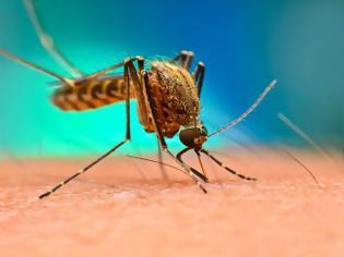 Φωτογραφία για Γιατί σε προτιμούν τα κουνούπια;