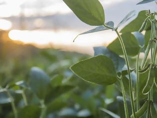 Φωτογραφία για Αυτό το φυτό μπορεί να μας σώσει από τη νόσο Αλτσχάιμερ