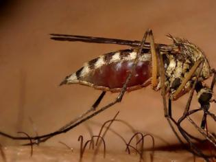 Φωτογραφία για Σε «καραντίνα» περιοχές της χώρας λόγω του ιού του Δυτικού Νείλου.