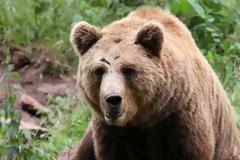 Ο άνθρωπος εξαφάνισε τις αρκούδες των σπηλαίων πριν 24.000 χρόνια