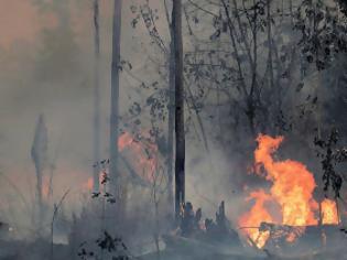 Φωτογραφία για Ποιοι κάνουν παρανάλωμα τον Αμαζόνιο
