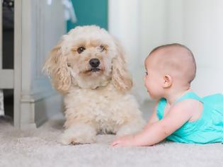 Φωτογραφία για Μωρό στην οικογένεια: O σκύλος σας το ξέρει;