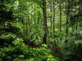 Φωτογραφία για Η Ιρλανδία θα φυτέψει 440 εκατ. δένδρα έως το 2040 για την καταπολέμηση της κλιματικής αλλαγής