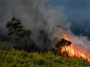 Φωτογραφία για Φωτιά στη Νέα Μάκρη: Εμπρησμό «δείχνει» η έναρξη στις 2:17