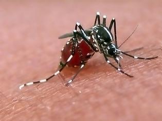 Φωτογραφία για Υπουργείο Υγείας: Έκτακτη σύσκεψη για τα μολυσμένα κουνούπια