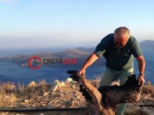 Φωτογραφία για Κρήτη: Έσωσαν τον γύπα που είχε χάσει τον προσανατολισμό του