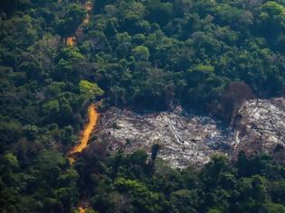 Φωτογραφία για Αμαζόνιος: Τρομακτική η αύξηση της αποψίλωσης