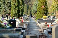 Αυτός είναι ο λόγος που σε όλα τα νεκροταφεία υπάρχουν κυπαρίσσια