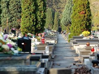 Φωτογραφία για Αυτός είναι ο λόγος που σε όλα τα νεκροταφεία υπάρχουν κυπαρίσσια