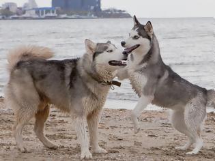 Φωτογραφία για Γιατί ο σκύλος «καβαλάει» το πόδι μας και τους άλλους σκύλους