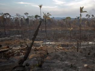 Φωτογραφία για Κάθε χρόνο ο πλανήτης μας χάνει ένα δάσος όσο η Βρετανία!