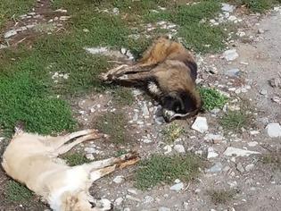 Φωτογραφία για Εξόντωσαν 26 σκύλους με φόλες στην Φλώρινα - Καταγγέλλει ο Αρκτούρος