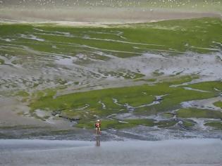 Φωτογραφία για Οσμή θανάτου στη Γαλλία: Παραλίες γεμάτες με τοξικό φύκι - Μπορεί να σκοτώσει σε δευτερόλεπτα
