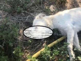 Φωτογραφία για Δυτική Ελλάδα: Σύλλογος επικήρυξε με 1500 ευρώ τους δράστες που δηλητηρίασαν τρία σκυλιά