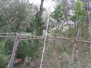 Φωτογραφία για Έτσι εντοπίστηκε η χασισοφυτεία και τα 12 κιλά χασίς σε χωριό της Δ.Ε. Νεάπολης Αγρινίου (φωτο)
