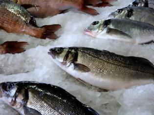 Φωτογραφία για Χρ. Στελακάτος: «Η βιομηχανία ψαριών μάς ταΐζει καρκίνο, δεν θα σταματήσω να το λέω»