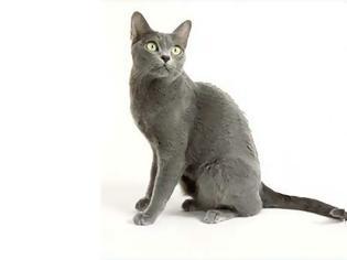 Φωτογραφία για Κόρατ: Η γάτα με τις πέντε καρδιές που φέρνει καλοτυχία