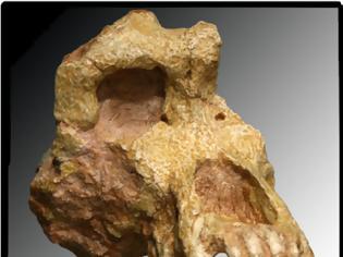 Φωτογραφία για Ο ΟΥΡΑΝΟΠΙΘΗΚΟΣ ο ΜΑΚΕΔΟΝΙΚΟΣ - Το ΑΡΧΑΙΟΤΕΡΟ έως τώρα ΑΝΘΡΩΠΟΕΙΔΕΣ στον κόσμο, έζησε πριν 11.000.000 χρόνια στην Μακεδονία