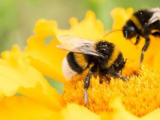 Φωτογραφία για Οι μέλισσες, το πιο σημαντικό έμβιο όν στον πλανήτη, απειλούνται με αφανισμό