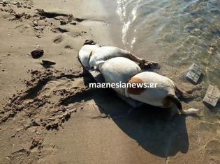 Φωτογραφία για Άγρια κακοποίηση σκύλου – Έδεσαν πέτρες και τον πέταξαν στη θάλασσα!