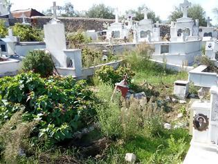 Φωτογραφία για Πνιγμένο στα χόρτα το νεκροταφείο στον ΠΡΟΔΡΟΜΟ Ξηρομέρου - [ΦΩΤΟ]