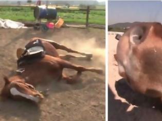 Φωτογραφία για Άλογο για Όσκαρ: Όποτε πάει να το καβαλήσει κάποιος, κάνει ότι πεθαίνει (vid)