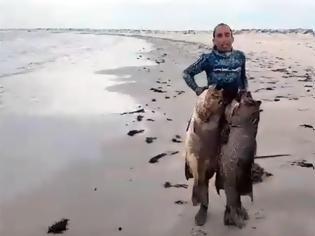 Φωτογραφία για Ο Έλληνας ψαροντουφεκάς με το ρεκόρ τσιπούρας ξαναχτύπησε: Δείτε τι έβγαλε στο Μεξικό