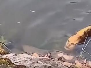 Φωτογραφία για Ψάρι με ανθρώπινο πρόσωπο Viral στο Διαδίκτυο (video)