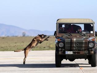 Φωτογραφία για Επίδειξη σκύλων της ομάδας «Κέρβερος» στην 110 Π.Μ.