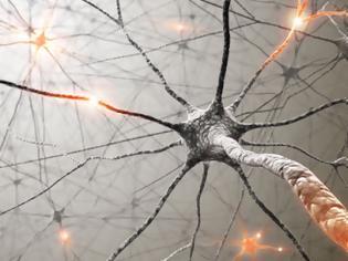 Φωτογραφία για 7 τρόποι για να αναπτυχθούν νέοι νευρώνες σε οποιαδήποτε ηλικία