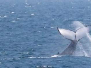 Φωτογραφία για Φάλαινα στη Σκωτία βρέθηκε νεκρή έχοντας στο στομάχι της σκουπίδια 100 κιλών
