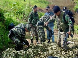 Φωτογραφία για Περού: Οι αρχές κατέστρεψαν 250.000 στρέμματα με κόκα