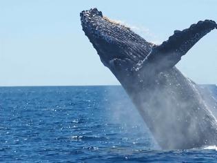 Φωτογραφία για Ρωσία: Οι φάλαινες μεταναστεύουν προς τις νότιες θάλασσες