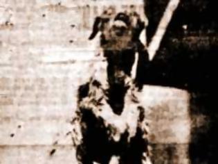 Φωτογραφία για Το οκτάποδο κατσικάκι, που γεννήθηκε από γαϊδούρα, το 1931…
