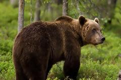 Οδηγός τραυματίστηκε από σύγκρουση με αρκούδα!