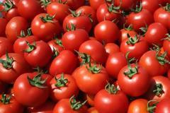 25χρονος έκλεψε από θερμοκήπιο ένα τόνο ντομάτες!